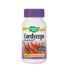 Natures Way Cordyceps 60 Veggie Caps
